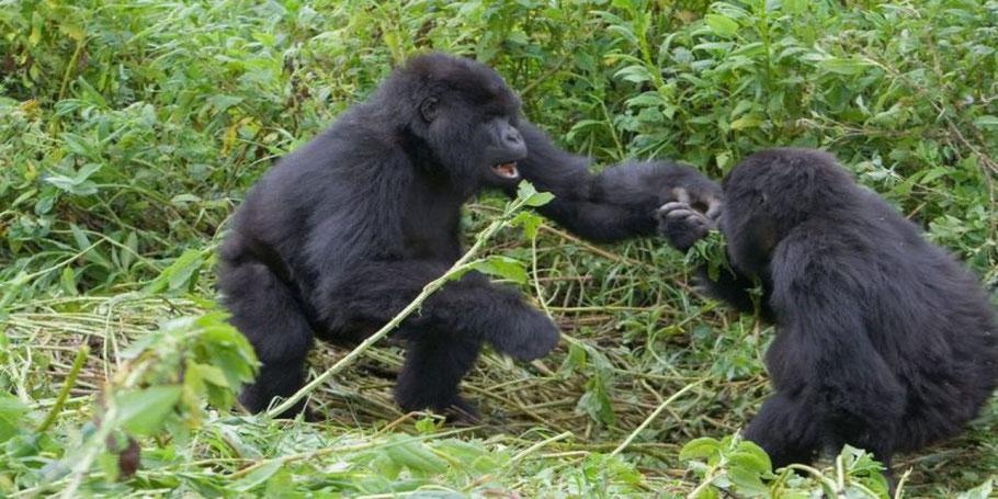 Nhuringo-Sector-of-Bwindi-Impenetrable-Forest-National-Park.jpg