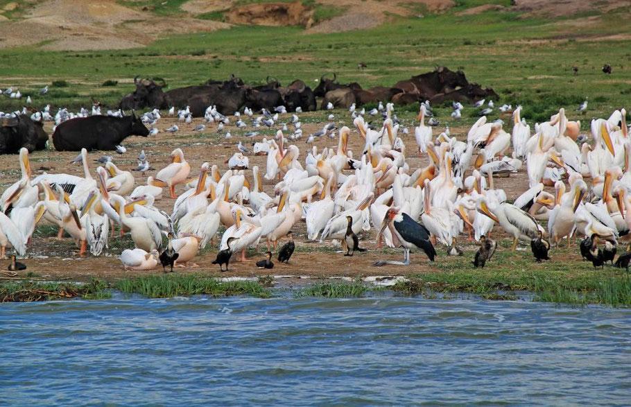 Lake-Mburo-National-Park-Birds.jpg