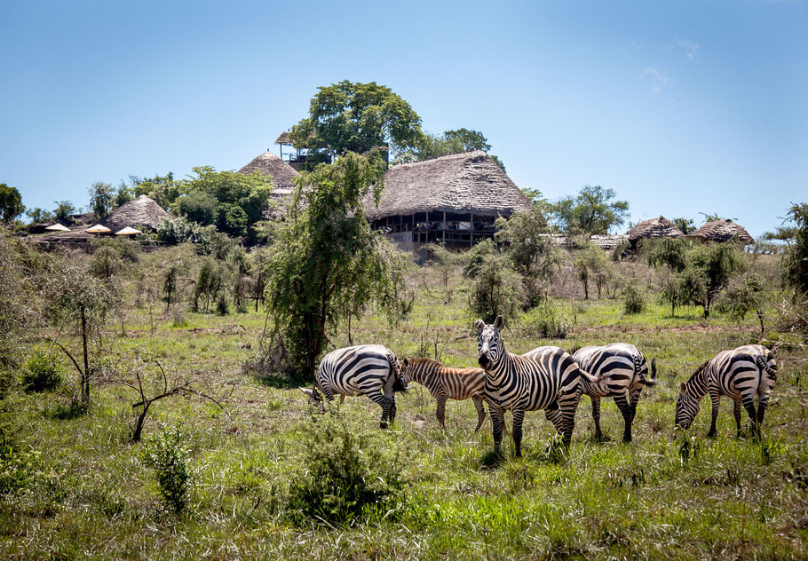 Apoka-Safari-Lodge.jpg