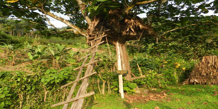 Bwindi -Forest -Impenetrable-National-Park-wildlife.jpg