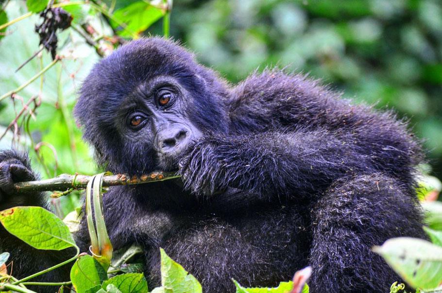 Kwita-izina-gorilla-naming-ceremony-2019.jpg