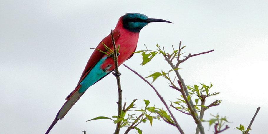 Bird-watching-in-Murchison-falls-national-park.jpg