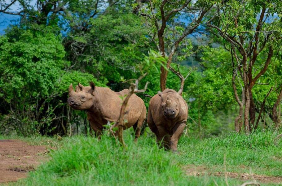 rhinos-akagera-national-park.jpg
