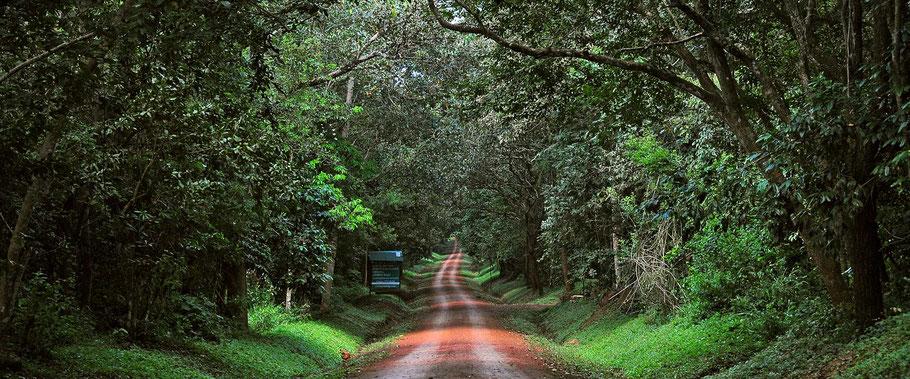 Budongo-forest-reserve.jpg