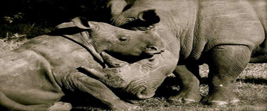 Ziwa-Rhino-Sanctuary.jpg