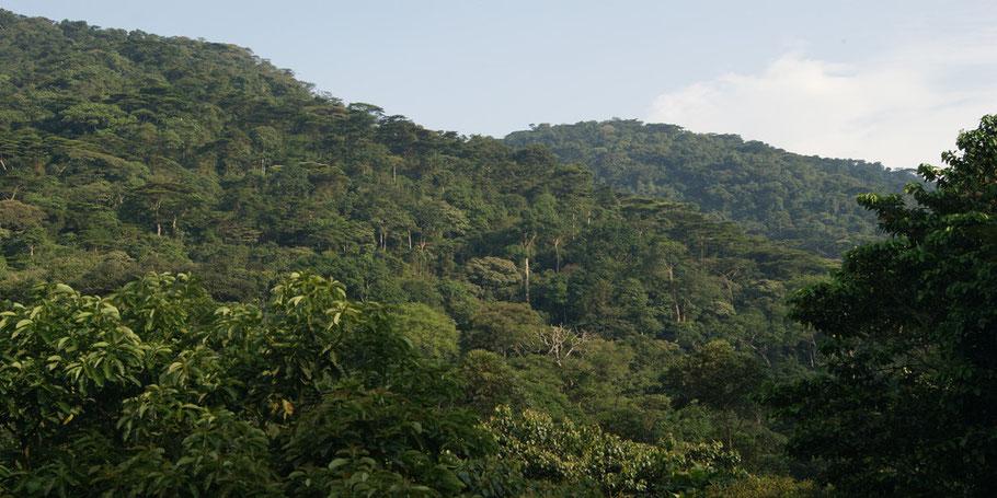 Bwindi-Impenetrable-Forest-National-Park.jpg