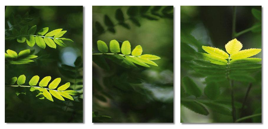 Birte Bassmann Triptychon Wald