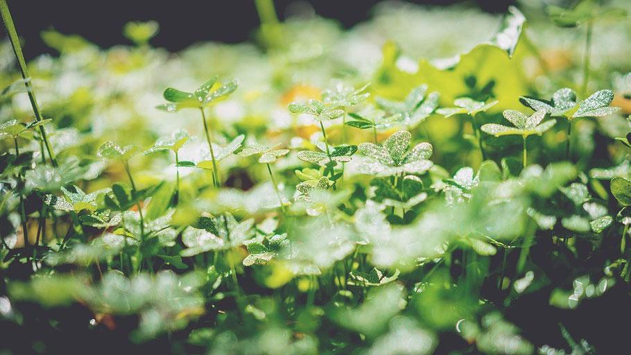 plante sauvage nadia delbreil léa tarologie