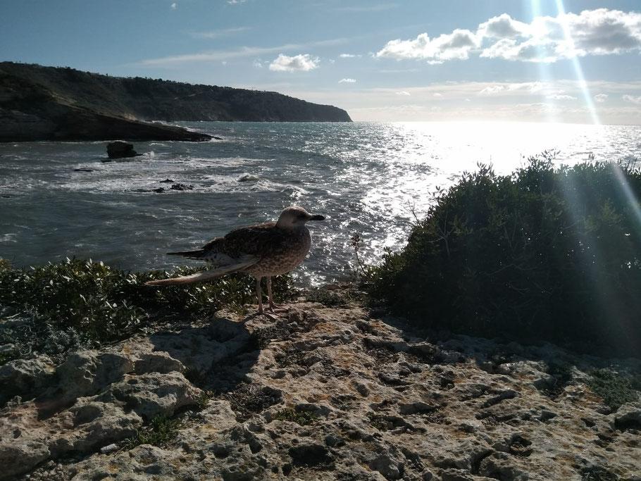 erste Meereslinie Mallorca