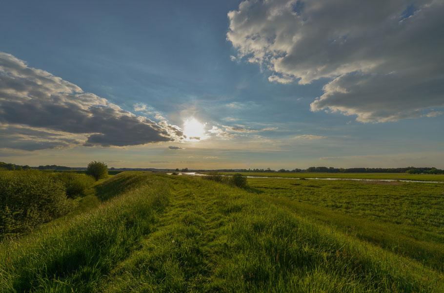 Deichwanderung an der Tauben Elbe bei Penkefitz