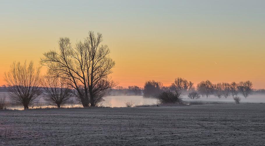 In der Jeetzelniederung bei Hitzacker, kurz vor Sonnenaufgang