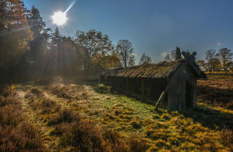 November in der Heide ...