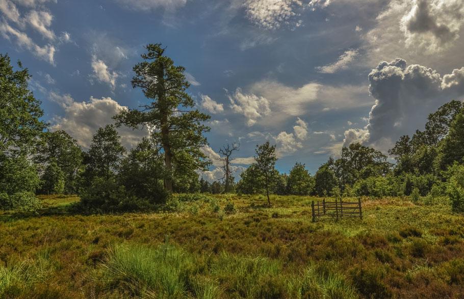 Naturschutzgebiet Breeser Grund