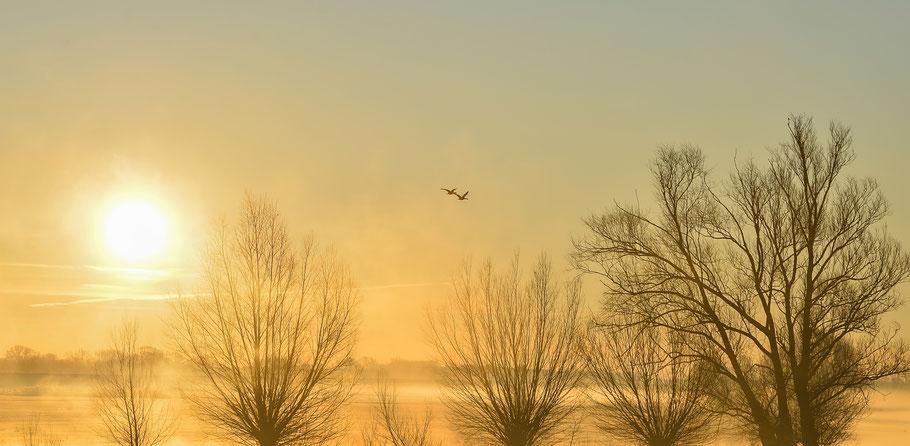 Sonnenaufgang in der Jeetzelniederung bei Hitzacker an der Elbe