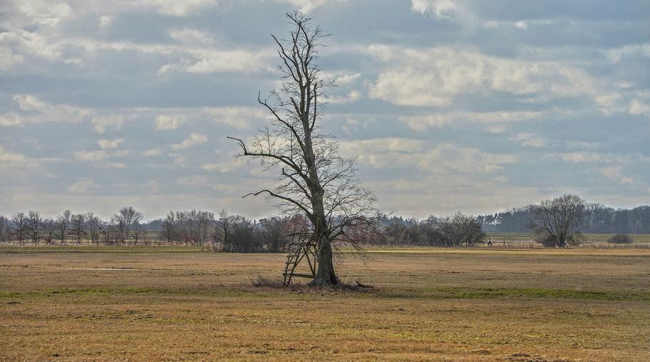 Der einsame Baum ...