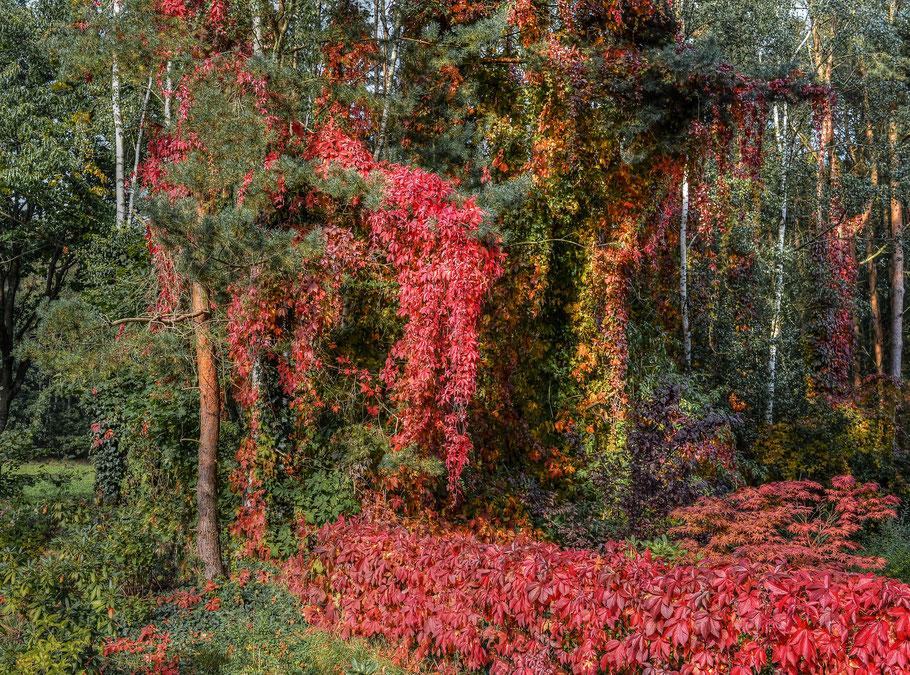 Herbstfarben ...