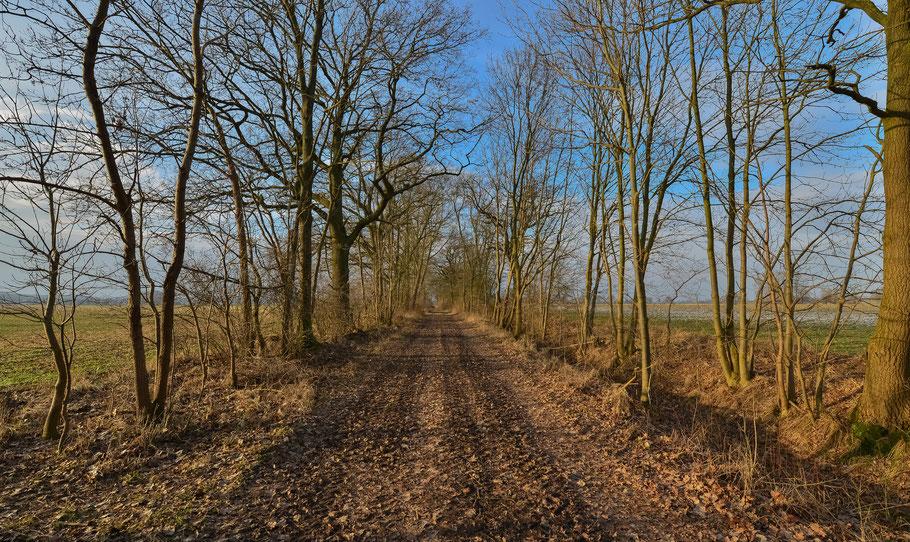 Winterwanderung auf dem Feldweg zwischen Grabau und Predöhlsau