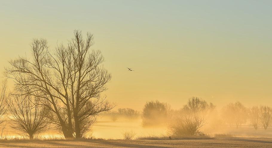 Mystical morning...