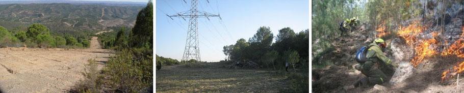 Varios ejemplos de eliminación del combustible en entorno forestal