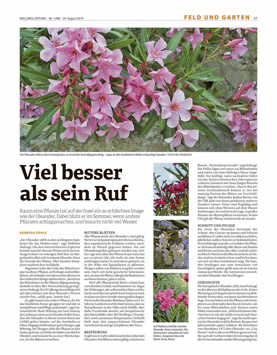 """Mallorca Zeitung, Oleander, """"Viel besser als sein Ruf""""."""