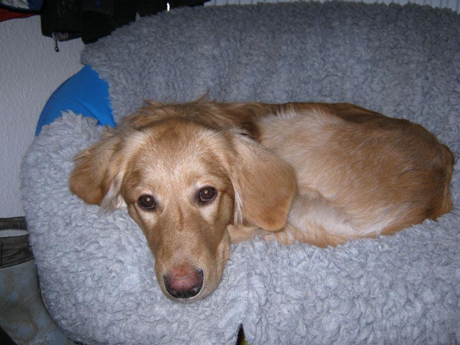Bellis liebt ihren eigenen Stuhl immernoch, denn eigentlich passt sie schon fast nicht mehr hinein...