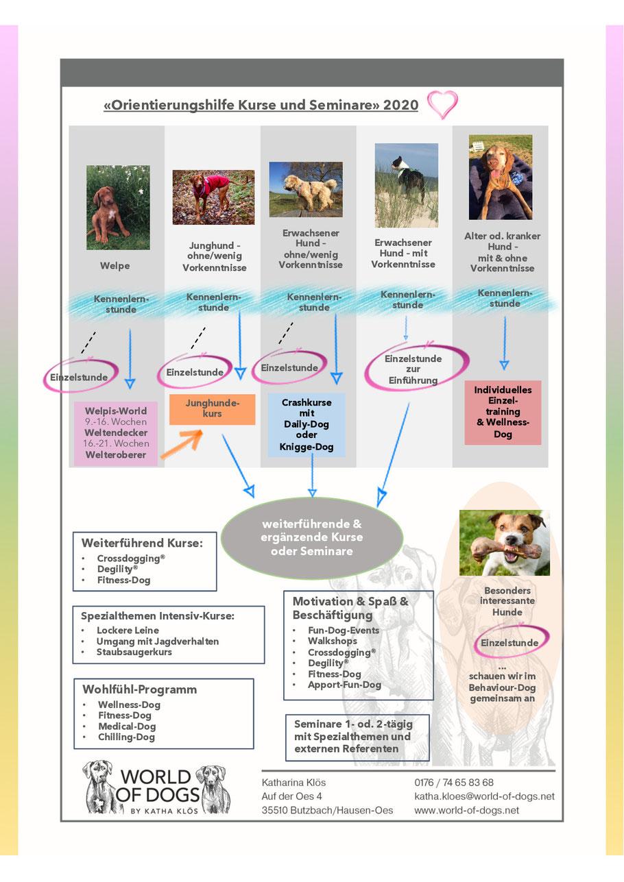 Hundeschule Butzbach, Wetterau, Pia Gröning, Welpenstunde, Junghundekurs, Anti-Jagdtraining, Jagdhunde, Socialwalks, Hundesport, Degility, Crossdogging, Hundetrainer
