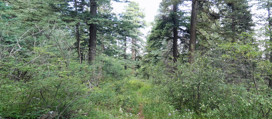 Las Huertas Canyon overlook trail, Sandia Mountains, Cibola National Forest, New Mexico