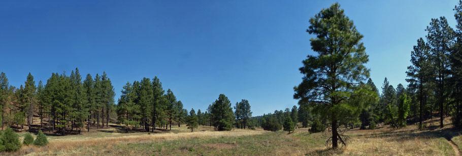 David Canyon, Turkey Trot Trail, Manzanita Mountains, Cibola National Forest, New Mexico