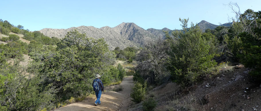 Forest Trail 2, Juan Tabo Canyon, Sandia Mountains, Cibola National Forest, New Mexico