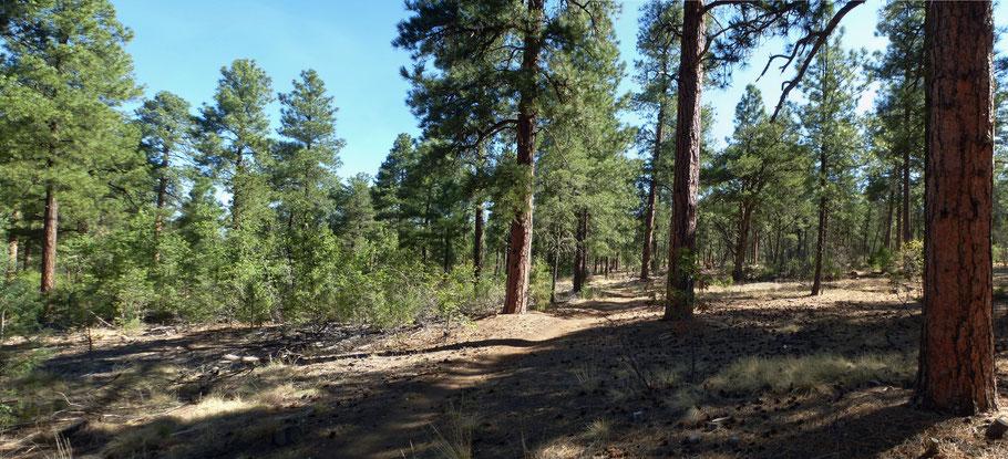 Turkey Trot Trail, Manzanita Mountains, Cibola National Forest, New Mexico