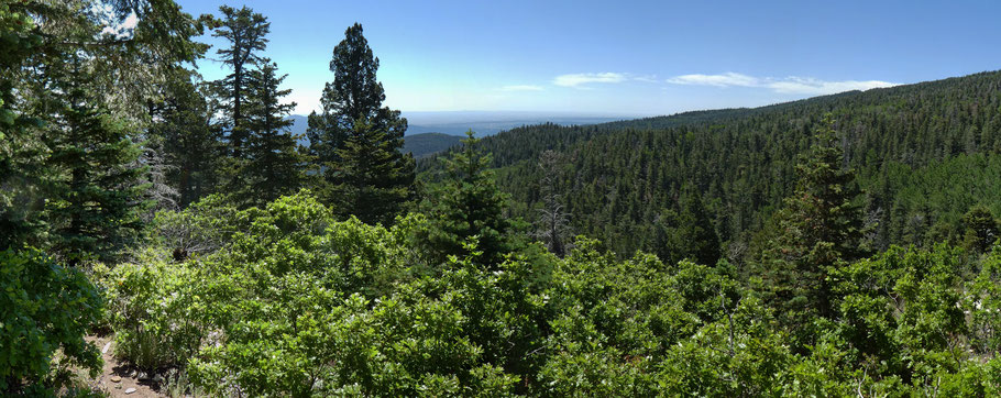 Osha Loop Trail, 10K Trail, Sandia Mountains, Cibola National Forest, New Mexico