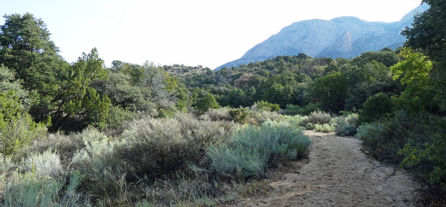 The Sandy Arroyo Trail, which looks like a sandy arroyo rather than a trail.