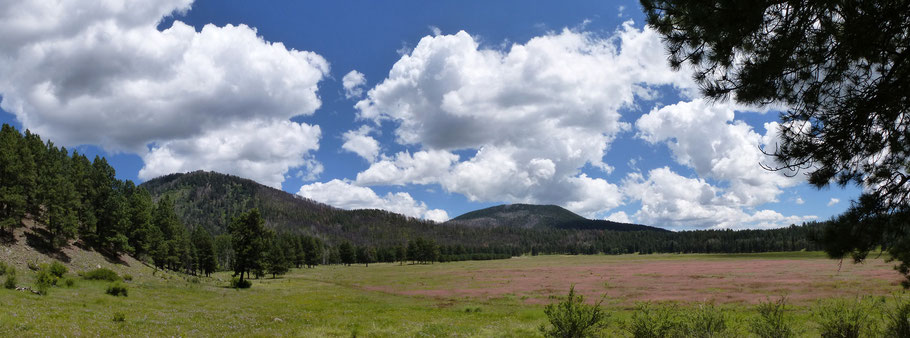 El Cajete, mountain meadow, trees, Valles Caldera, Jemez Mountains