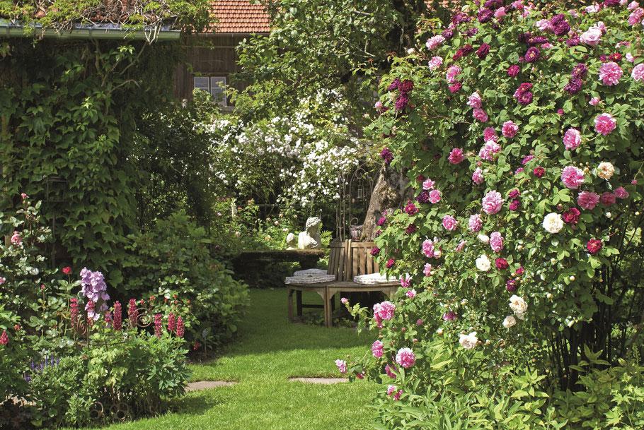 Baumbank im Rosengarten Sinneszauber