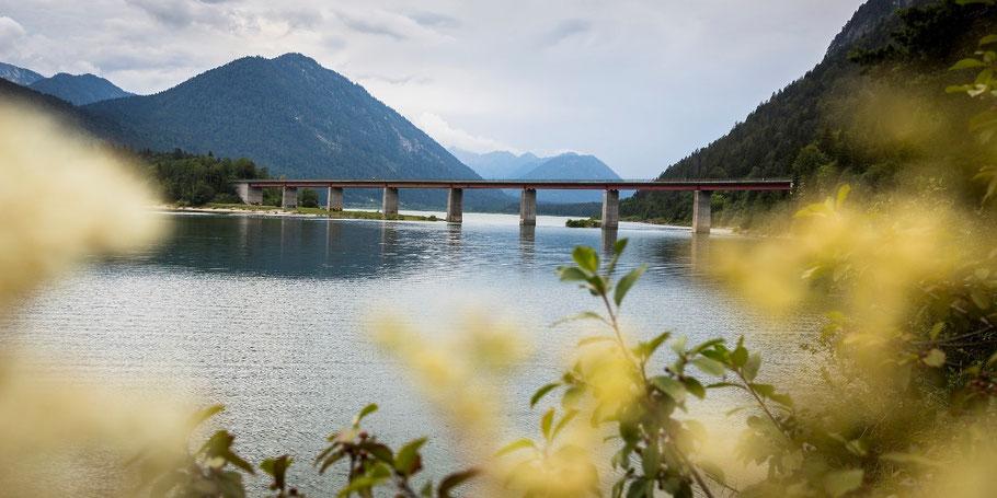 Blick zwischen gelben Blumen hindurch auf den Sylvensteinsee, die Brücke und das Karwendel im Hintergrund