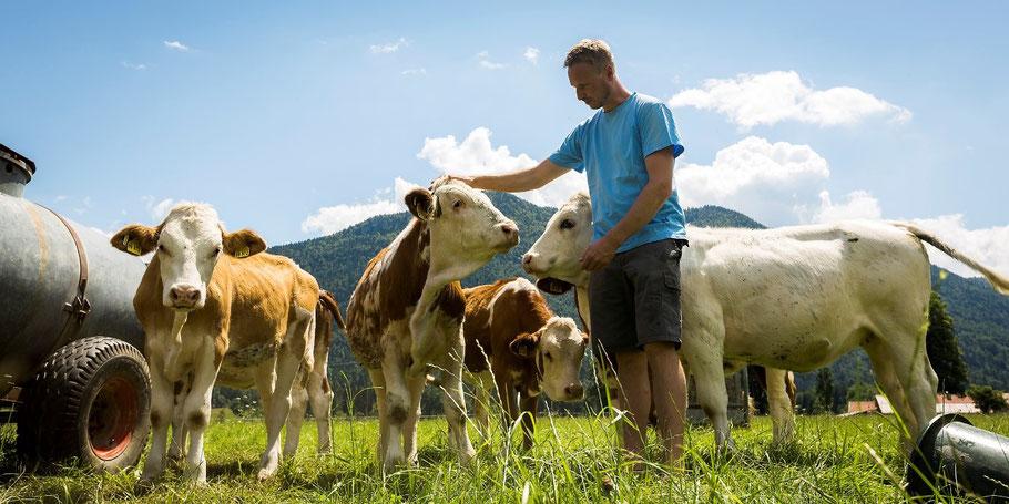 Stefan Klaffenbacher steht in Mitten seiner Kälber auf der Weide und streichelt eines davon. ein Wasserfass links und hinten Berge