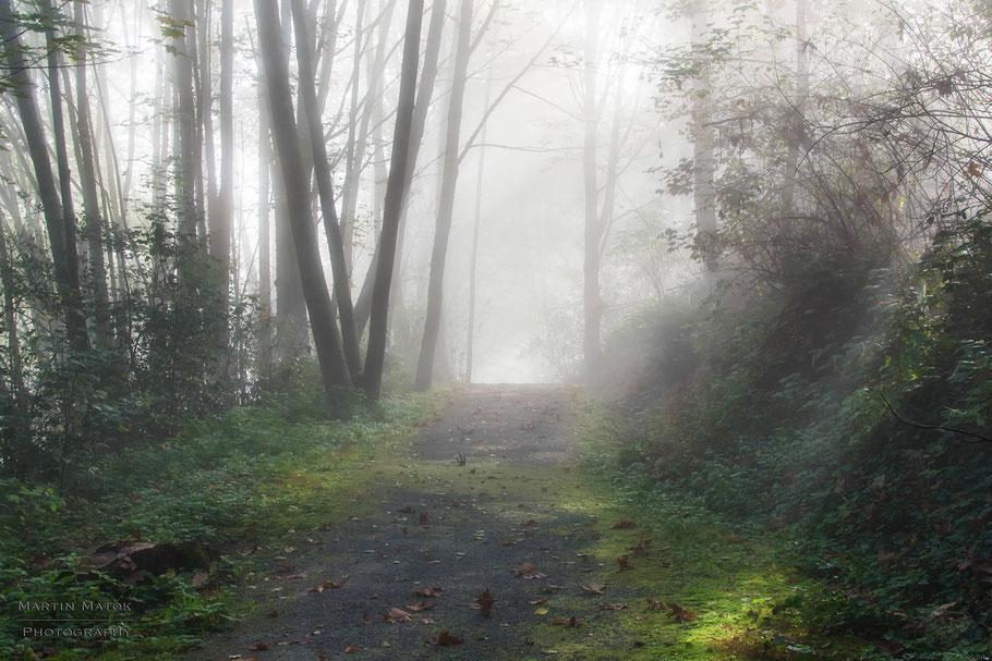 Kanada, Vancouver, Wald, Natur, Landschaftfotografie, der Beste Fotograf, Martin Matok, Nebel, Rüsselsheim am Main, Hessen, Fotografie