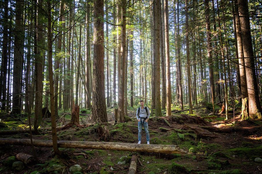 Kanada, Vancouver, Wald, Natur, Landschaftfotografie, der Beste Fotograf, Martin Matok, Nebel, Rüsselsheim am Main, Hessen, Fotografie, Kunst, Schiff, Bäumen