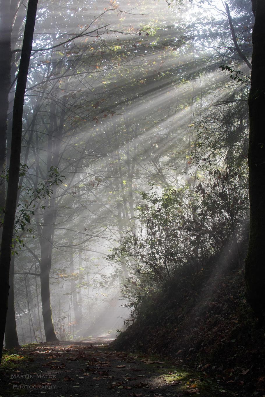 Kanada, Vancouver, Wald, Natur, Landschaftfotografie, der Beste Fotograf, Martin Matok, Nebel, Rüsselsheim am Main, Hessen, Fotografie Sonne