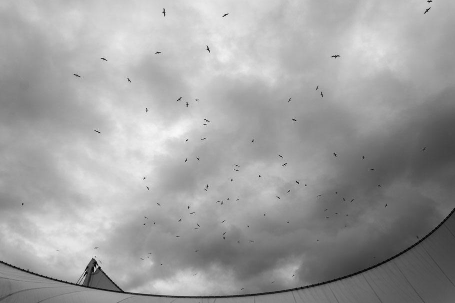 Kanada, Vancouver, Vogel, der Beste Fotograf, Martin Matok, Rüsselsheim am Main, Hessen, Fotografie, Kunst, Ozean, Meer, Wunderschön, Reise, Traum, Fliegen Stadt