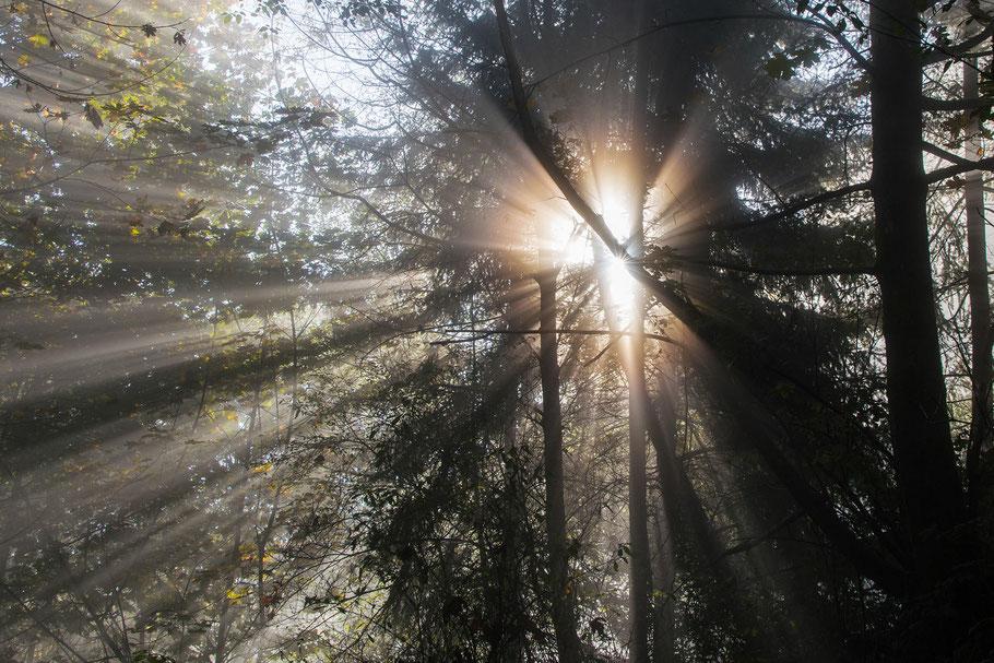 Kanada, Vancouver, Wald, Natur, Landschaftfotografie, der Beste Fotograf, Martin Matok, Nebel, Rüsselsheim am Main, Hessen, Fotografie, Sonne