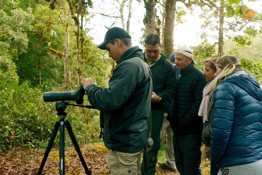Unsere Führerer Raúl Fernández und Stéphane Dähler suchen mit dem Fernglas nach dem  Quetzal