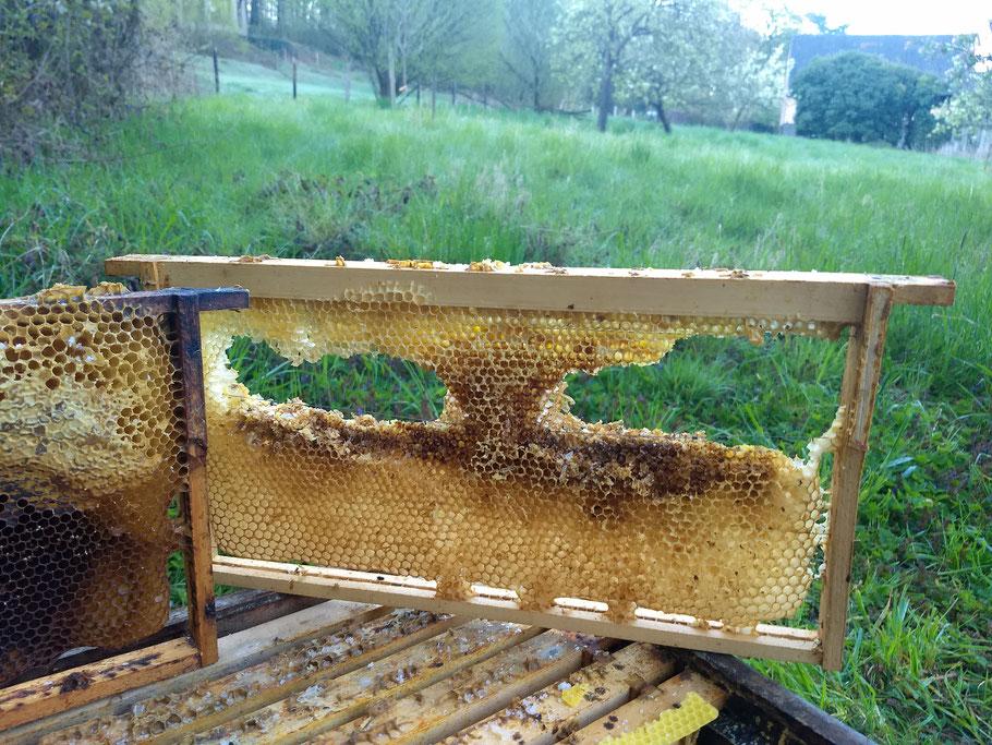 Hier hat die Maus zugeschlagen in der Bienenbeute