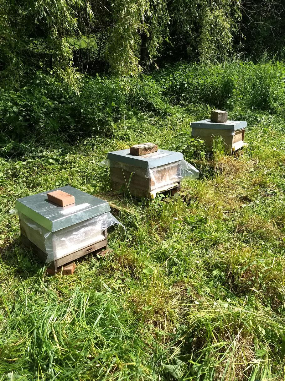 Nach einem Totalverlust der Bienenvölker im Dezember 2017 geht es jetzt wieder aufwärts. Hier sind drei frische Ableger auf einer Obstwiese im Wald in Witten-Gedern zu sehen.