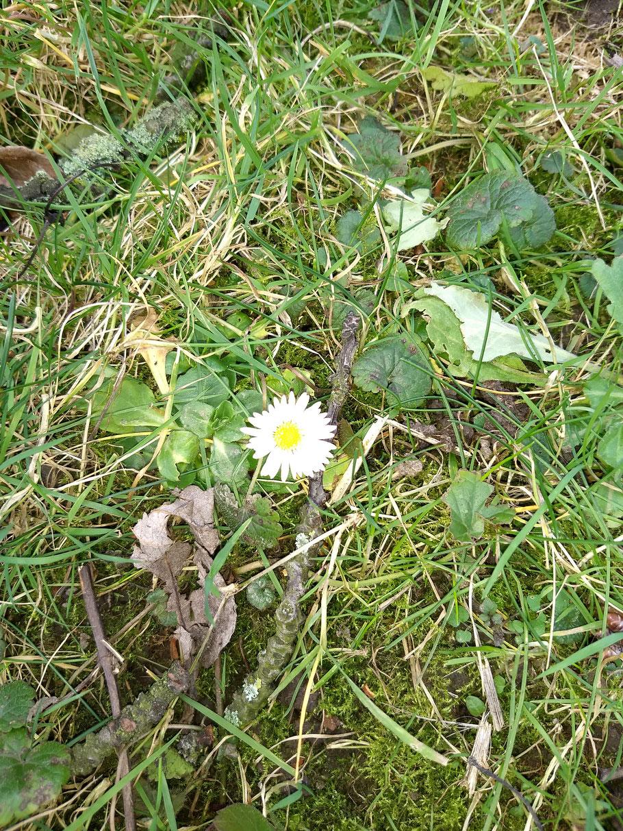 Der Frühling kommt.  Våren kommer. De lente komt eraan!