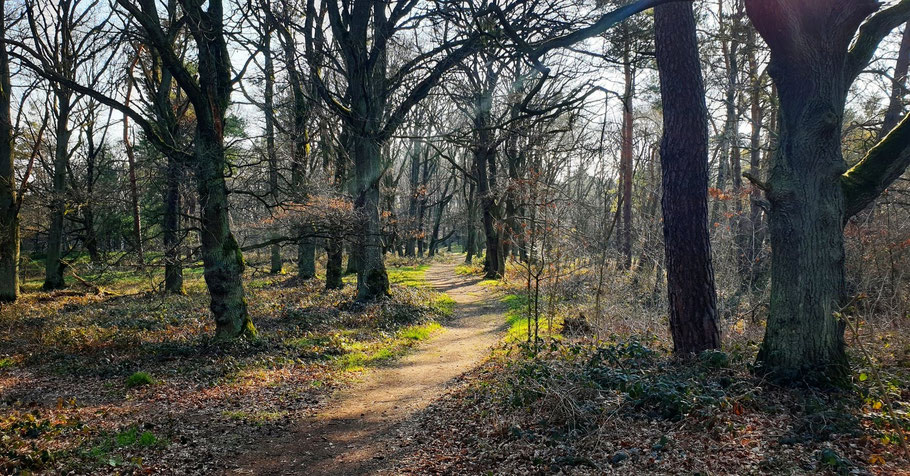 EifelSchleife - Altusknipp Weg