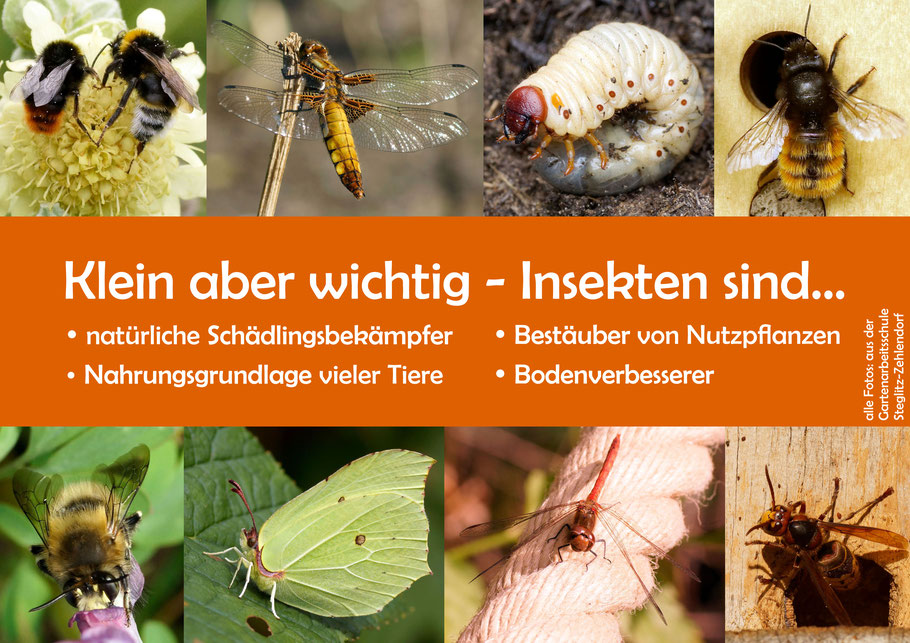 Insekten-Gartenarbeitsschule