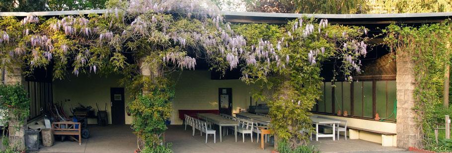 Blauregen-Gartenarbeitsschule