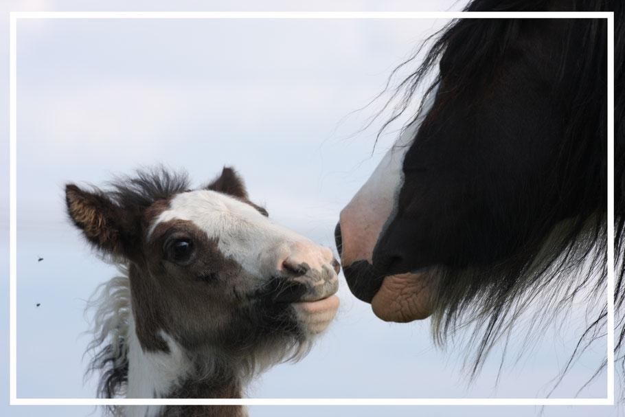 gesundes Fohlen mit Mutterstute
