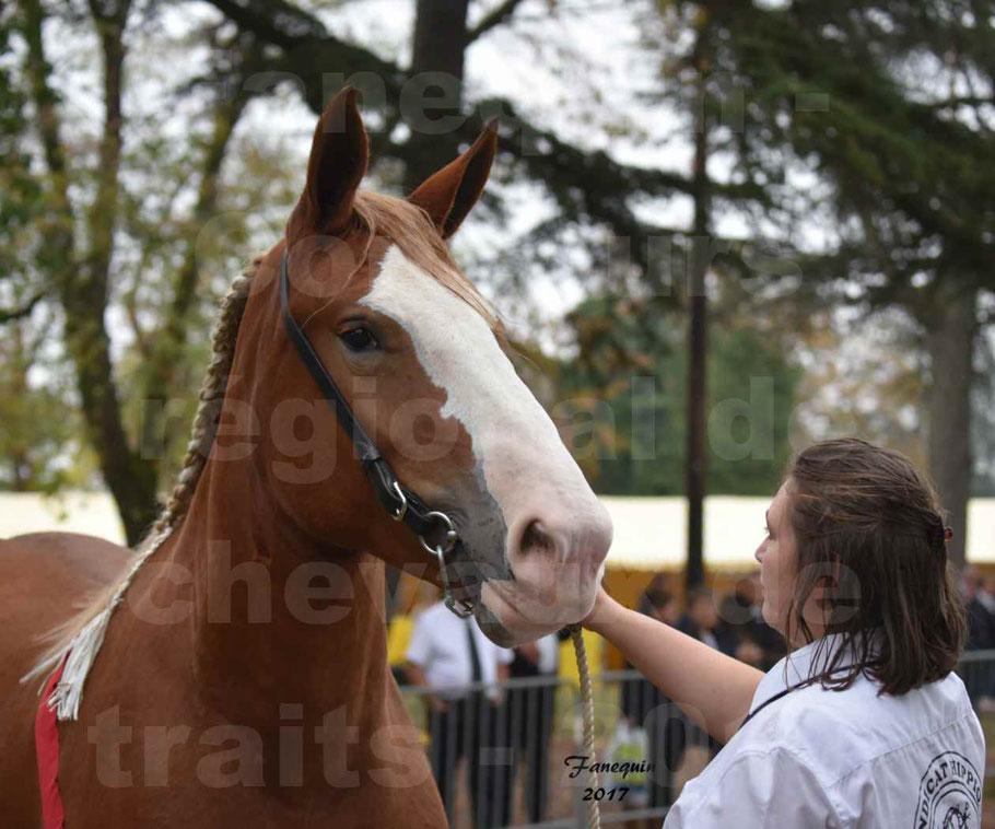 Concours Régional de chevaux de traits en 2017 - Trait BRETON - FEE DE MARLAC